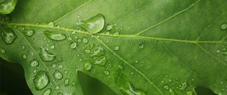 mindfulness clinic testimonials reviews leaf with droplets