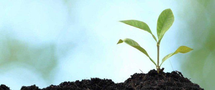 mindfulness foundation dublin ireland greenshoot plant growing organic natural relaxing calm